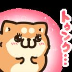 【無料スタンプ】タイムラインで使える★ボンレス犬と猫|配布期間は2020年12月2日(水)まで